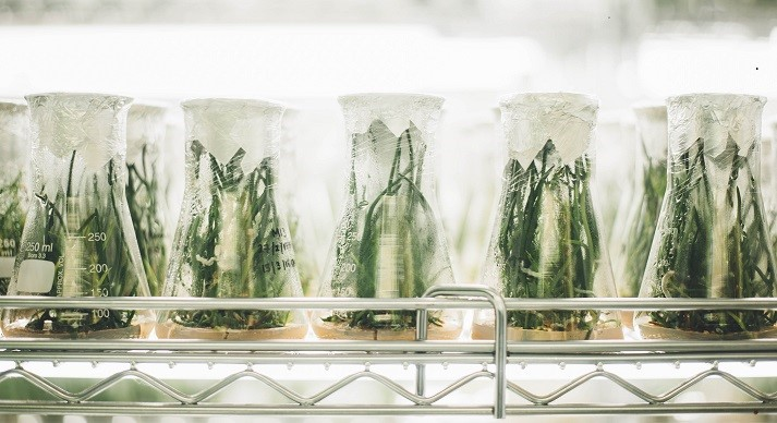 Beakers with plants growing in them in the lab